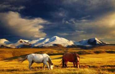 Mountain landscape - Ukok Plateau_12164025