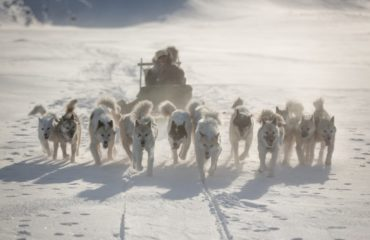 Dogs on a dog sledding trip near Ilulissat in Greenland fanning out in typical west Greenlandic fashion - Mads Pihl - Visit Greenland