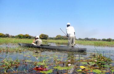 Botswana Okavango_51699475
