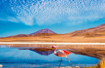 Photo-of-colorful-flamingo-in-a-lagoon-in-Bolivia-464413020_4810x3206
