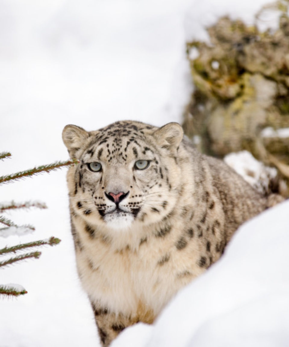 snow-winter-wildlife-wild-zoo-portrait-1280913-pxhere.com(1)